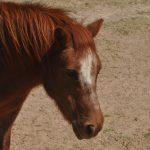 Cody. Barcoos first Shetland Pony.