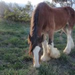 Barcoo's Farmstays Bathurst | Photos of Barcoos Farmstays Bathurst 14