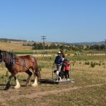 Barcoo's Farmstays Bathurst | Photos of Barcoos Farmstays Bathurst 1